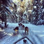 dog-sledding-sun-dogs-excursions-waskewsiu