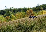 Lumsden countryside fall